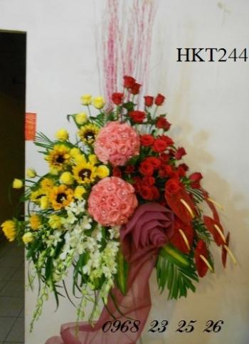 hoa khai truong hkt244