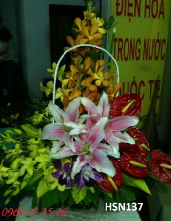 hoa sinh nhat hsn137