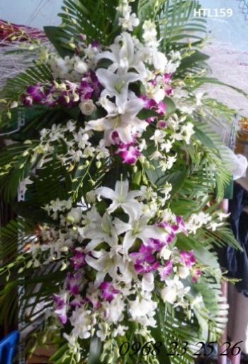 hoa tang le htl159