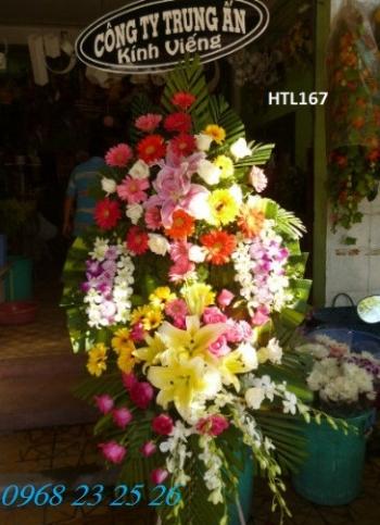 hoa tang le htl167