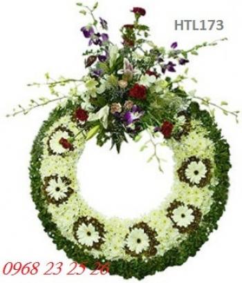 hoa tang le htl173