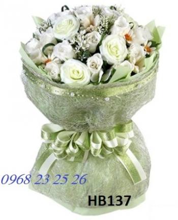 hoa bo hb137
