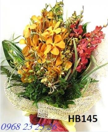 hoa bo hb145