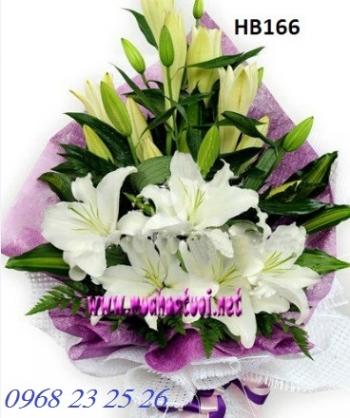 hoa bo hb166