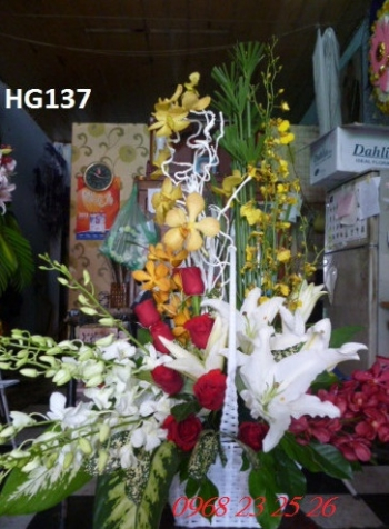 hoa gio hg137